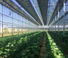 Cultures maraîchères sous serre photovoltaïque - Crédit Photo : Urbasolar