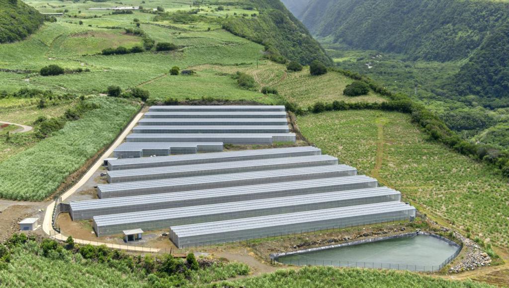En Bref: Akuo Energy, MAIF, EnBW, Valeco, Cap Vert Energie, Tudigo Energie, Dome Solar