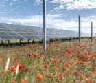 Copyright Paul-Langrock.de. Errichtung EnBW Solarpark Werneuchen. Bundesland Brandenburg. 23. Juni 2020