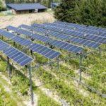 Agrivoltaïsme : la CRE récompense 22 projets utilisant la technologie de Sun'Agri