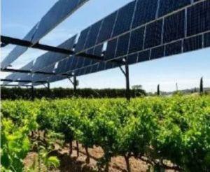Engie Green et Sun'Agri s'allient pour accélérer le développement de l'agrivoltaïsme