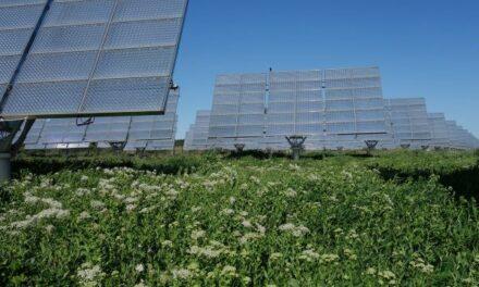 Neoen cède deux centrales solaires à Amarenco