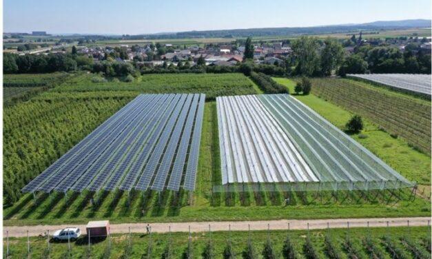 Premier système Agri-PV pour une culture fruitière neutre en CO2 en test en Allemagne